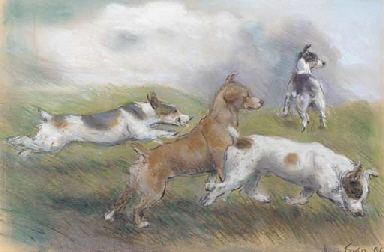 Jack Russell Terriers on the s