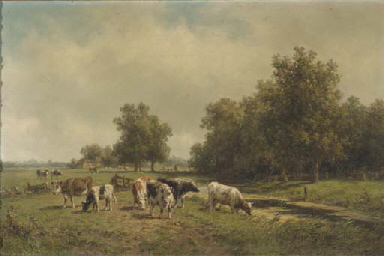 Cows in evening light