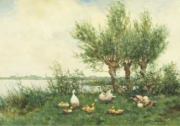 Ducks with ducklings on a rive