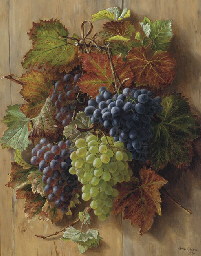 Red and white grapes hanging f