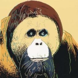 Orangutan, from Endangered Spe