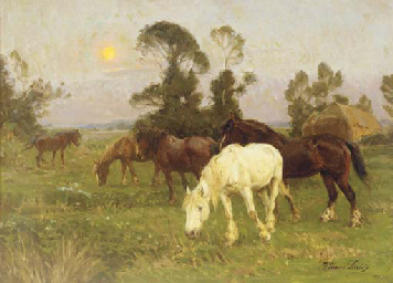 Horses in a pasture at dawn