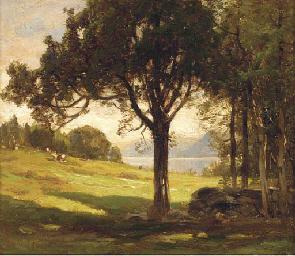 The cedar meadow