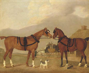 Two carriage horses in harness