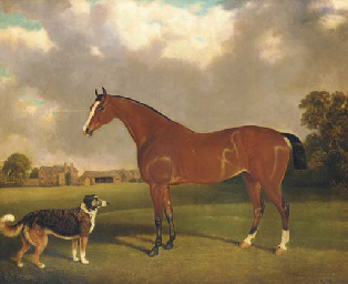 A bay horse and a dog in a lan