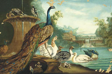 A peacock, ducks, doves and ot