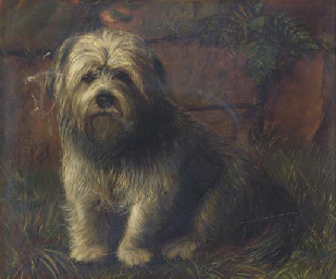 Portrait of a terrier