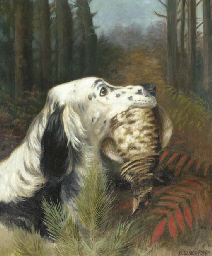 An English setter with a partr