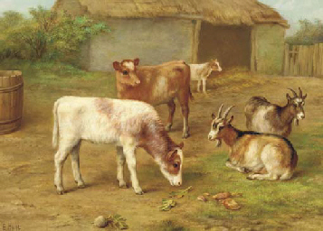 Calves and goats in a barnyard
