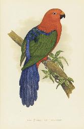 Parrots in Captivity: Six Plat