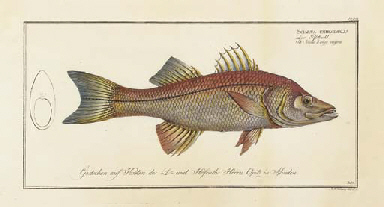 Ichthyologie, ou Histoire Natu