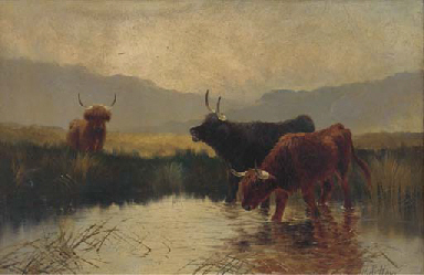 Cattle watering in a Highland