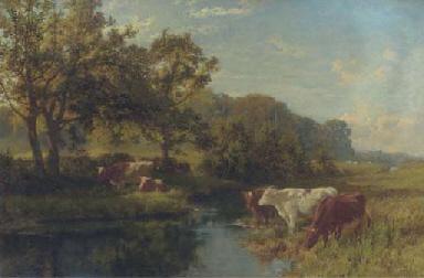 Cattle watering in a meadow