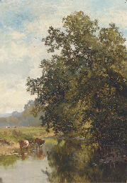 Cattle watering on the River M