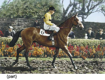 ARKLE AND PAT TAAFE