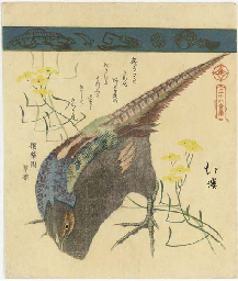 Pheasant with yellow flowers,