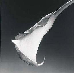 Calla Lily, 1988