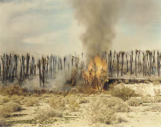 Desert Fire, #1 (Burning Palms