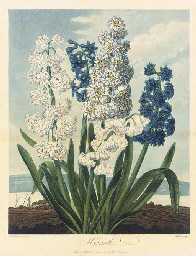 Hyacinths, from Temple of Flor