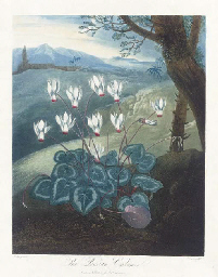The Persian Cyclamen, from Tem