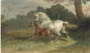 A grey mare galloping through