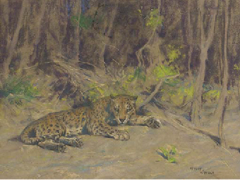 A leopard resting in the shade