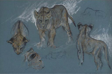 A study of lion cubs and a leo
