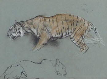 A study of two tigers: one cro