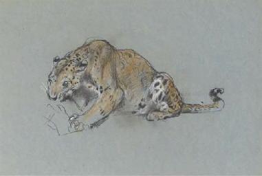 A leopard devouring his prey