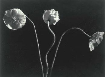 Poppies, 1989