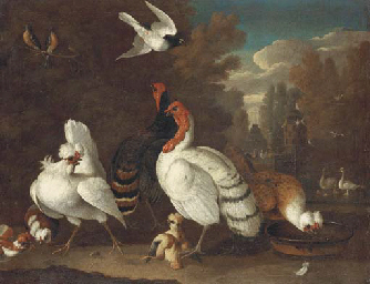 Fowl and other birds in a form