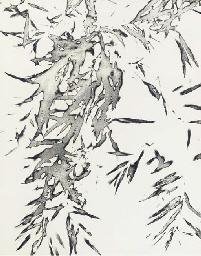Colin Self (b.1941)