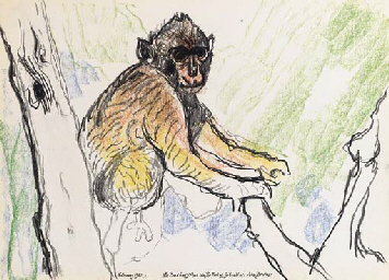 The Barbary Ape on the Rock of