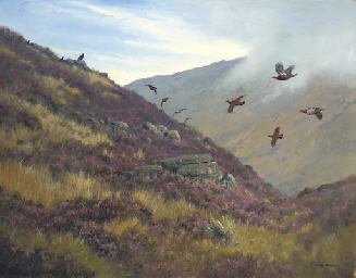 Red Grouse Skirting a Hill - P