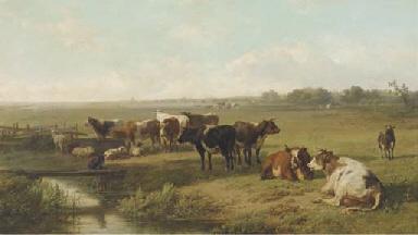 Cattle in an extensive polder
