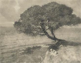 Parasol Pine, c.1910
