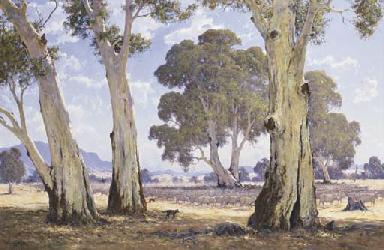 Australian Sheep Country, Cood