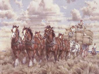 Draught Horses with Stockmen