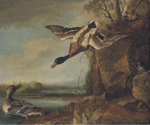 Mallard and chaffinches in a r