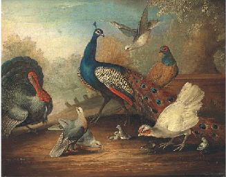 A peacock, doves and pheasant