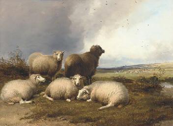 Sheep grazing in a landscape,