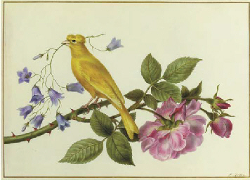A canary perched on a the branch of a pink rose, carrying harebells in its beak