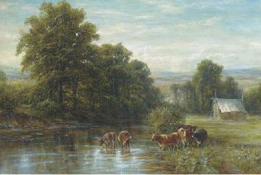 Cattle watering, summer