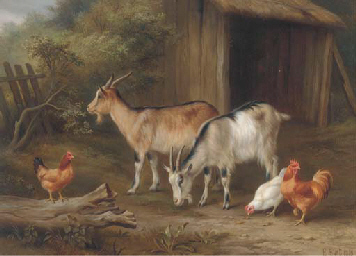 Goats and chickens in a yard