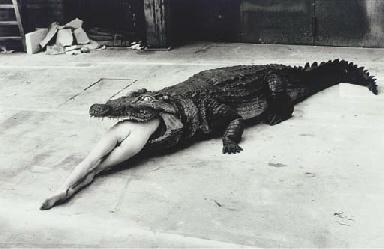 Crocodile Eating Ballerina, fr
