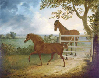 A mare and foal by a five bar