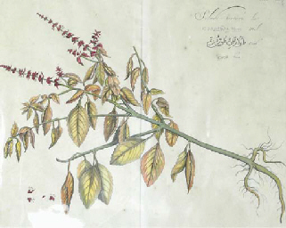 [Botanicals]: Two Plates