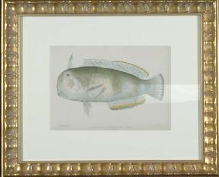 Fish of the Hawaiian Islands: