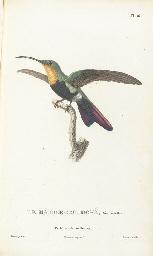 LESSON, René-Primevère (1794-1849). Histoire naturelle des colibris, suivie...