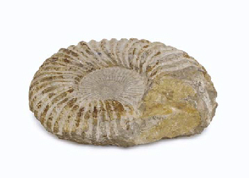 STONE FOSSIL FROM CAPTAIN PICARD'S READY ROOM